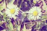 small daisy flower on green lawn with shallow focus in retro abstract color