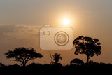 african sunset with tree in front hwange national park matabeleland north zimbabwe
