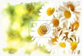 Fotografie akvarel vintage effect of spring daisy flower field watercolor