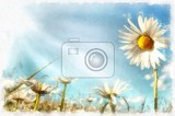 akvarel vintage effect of spring daisy flower field watercolor