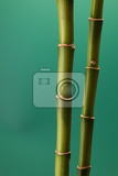 Scape of Bamboo