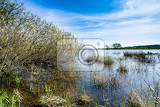 reeds at the pond in spring against blue sky rural scene