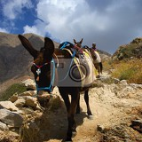 To the right. Summer and holidays. Island, travel, donkey and mountains. Greece - Santorini.
