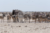 crowded waterhole with elephants zebras springbok and orix etosha national park ombika kunene namibia true wildlife photography