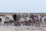 Photo crowded waterhole with elephants zebras springbok and orix etosha national park ombika kunene namibia true wildlife photography