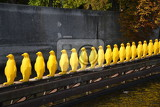 Yellow penguins on Kampa