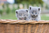 Fotografie lovely kittens
