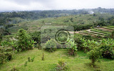 panorama of beautiful rice terraced paddy fields in central bali indonesia
