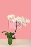 romantic branch of white orchid on pastel colors background
