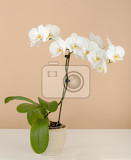 Fotografia romantic branch of white orchid on beige background