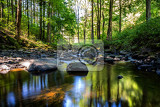 Fotografie small wild river brtnicka in bohemian forest on vysocina