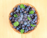 freshly picked damson plums in a wicker basket