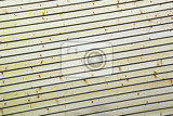 Photo wood planks texture and background