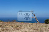 Fotografie dead tree at coastline at bali manta point famous diving place nusa penida with blue sky