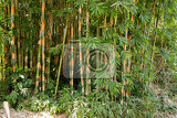 Photo detail of many of the early bamboo trees nusa penida bali indonesia