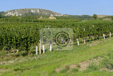 Fotografie vineyards under palava czech republic  south moravian region wine region
