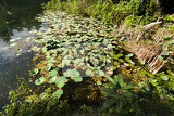 Photo water plants on indonesian pond near crystal beach nusa penida bali indonesia