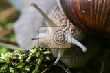 Snail detail of a head