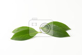 Fotografie fresh bay leaves on white background