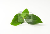 Fotografie sprig of bay leaves on white background