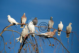 Fotografie group of domestic pigeons sitting on the branch agains blue sky