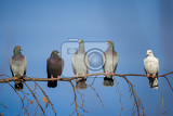 Photo group of domestic pigeons sitting on the branch agains blue sky