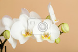 Photo romantic branch of white orchid on beige background