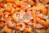 Fotografia background of the fresh shrimp closeup