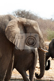 african elephants at a waterhole etosha national park ombika kunene namibia true wildlife photography