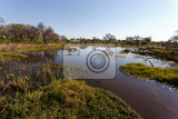Fotografia beautiful landscape in the okavango swamps with water lilies okavango delta botswana