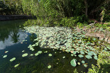 Fotografie water plants on indonesian pond near crystal beach nusa penida bali indonesia