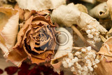 Fotografia detail of bouquet of dried roses with leaves