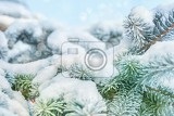 Photo coniferous branches covered with hoarfrost close up