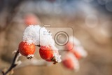 Fotografia red rosehip berries with hoar frost