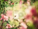 Fotografia beautiful bud of rose with soft focus as flower background  painting of vintage photo
