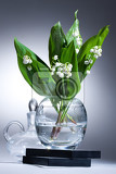 Fotografie lily of the valley in the glass vase