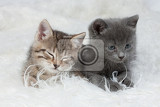 little kittens on isolated background