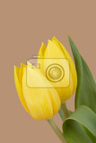 Photo beautiful bouquet of spring yellow tulips on beige background