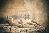 Fotografie striped tabby cat lying  small focus