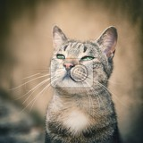 Fotografie portrait striped tabby cat  small focus