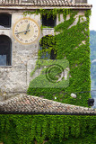 Fotografia ancient belfry covered with green ivy veneto italy
