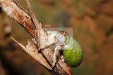 Photo close up of a hermit crab with green snail shell in natural habitat masoala national park rainforest madagascar wildlife and wilderness