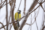 Fényképek beautiful small bird great tit parus major bird sitting on the tree branch covered by snow in winter garden