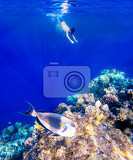 Fotografie coral and fish in the red sea in front is red sea surgeonfish in background snorkeling boy and blue sea with other coral fish egypt