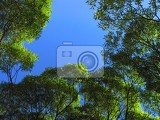 Fotografie branch of spring trees on bright blue sky background