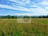 The meadow with nice blue sky with some little clouds by sunny day