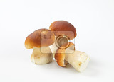 fresh edible bolete mushrooms on white background