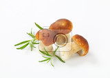 fresh porcini mushrooms and rosemary on white background