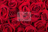 Fotografia fresh red roses with water drops valentine background concept