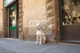 bulldog sitting and waiting for its master outside a shop